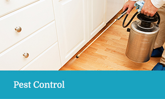 Pest Control Services - Terry's Steam Cleaning